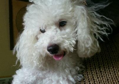 滝川クリステルの両親(父母)の愛犬