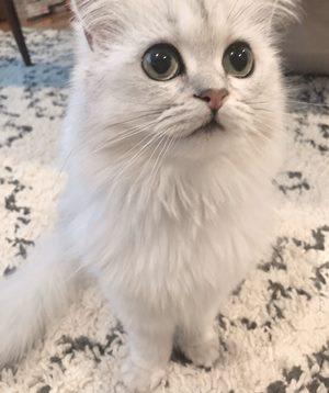 内田理央の猫