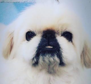犬種や値段や名前が様々な木村拓哉(キムタク)の犬のバブル
