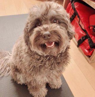 犬種や値段や名前が様々な木村拓哉(キムタク)の犬のアムール