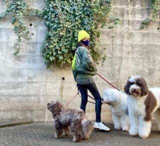 犬種や値段や名前が様々な木村拓哉(キムタク)の犬