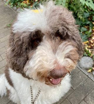 犬種や値段や名前が様々な木村拓哉(キムタク)の犬のエトワール